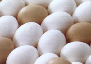 非公開: 鶏卵の写真