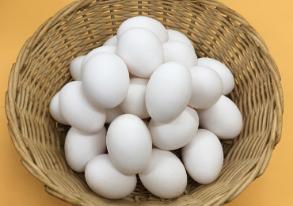 鶏卵の写真